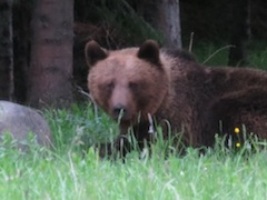 Bear Watching in Bulgaria